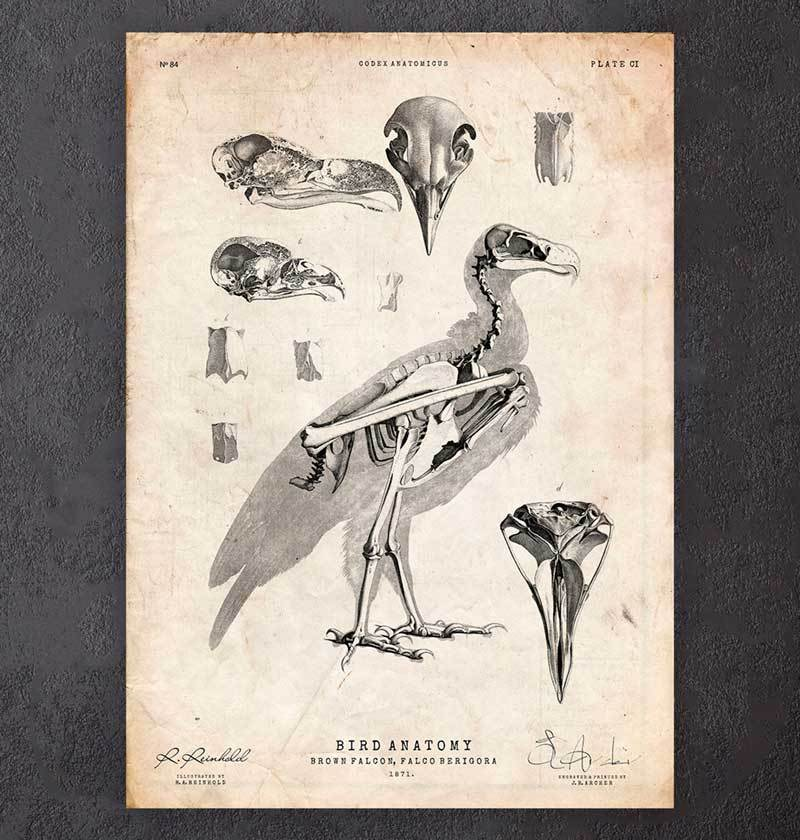 Bird anatomy art poster