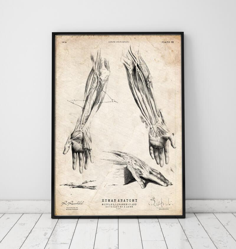 Human hand anatomy print by codex anatomicus