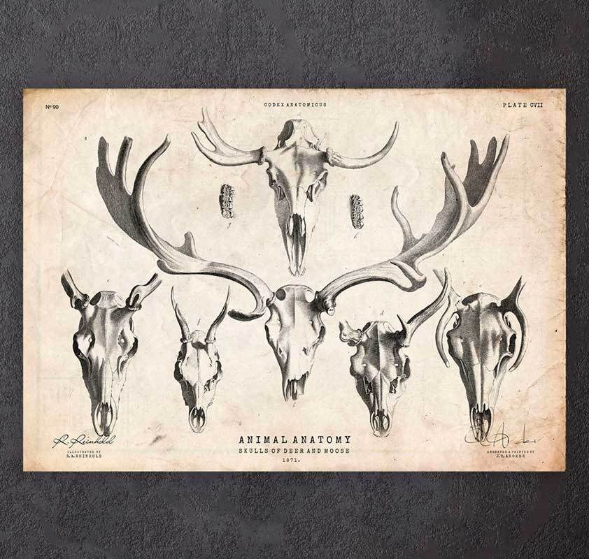 Deer and moose skulls art