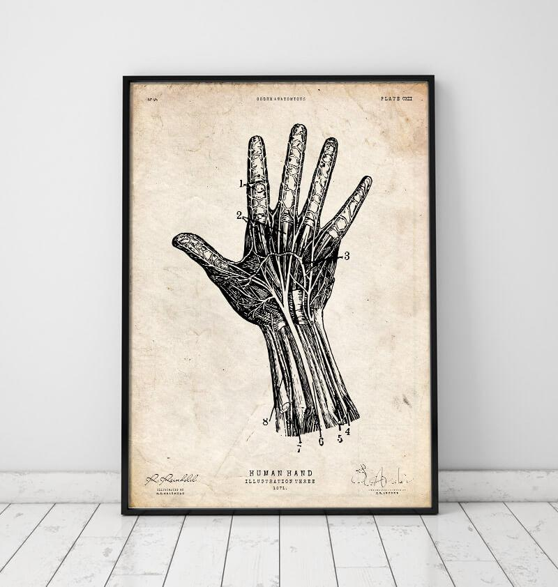 Hand anatomy chart by Codex Anatomicus