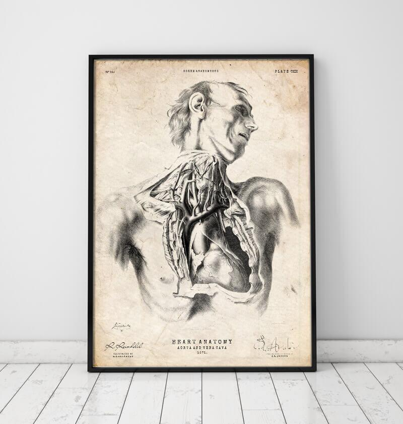 heart anatomy medical poster