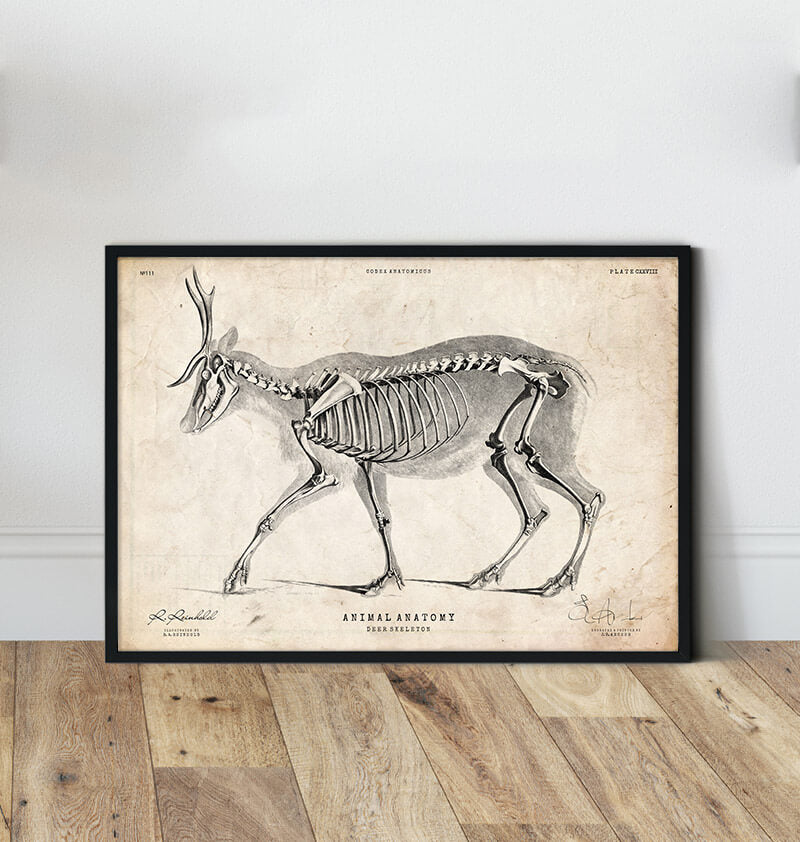 Deer anatomy art poster