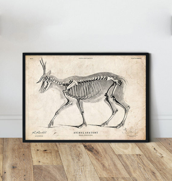 Animal Anatomy Anatomy Art Codex Anatomicus