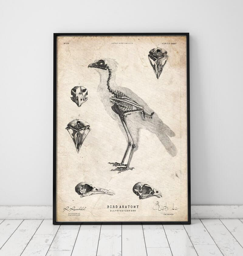 Bird anatomy poster