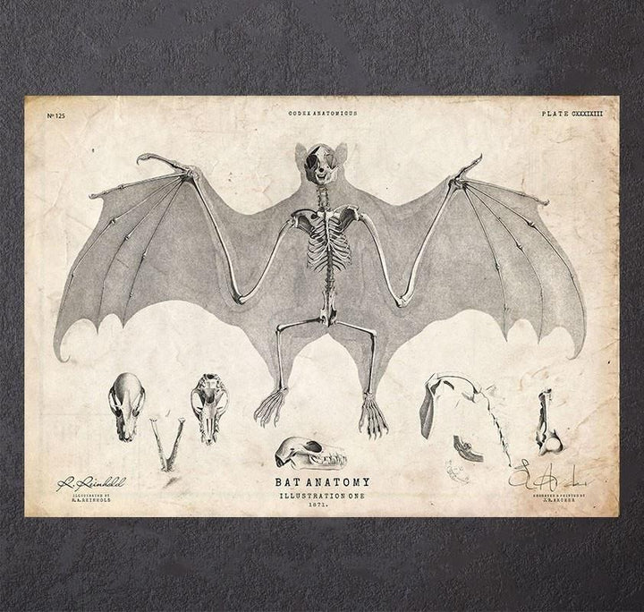 Bat anatomy art print
