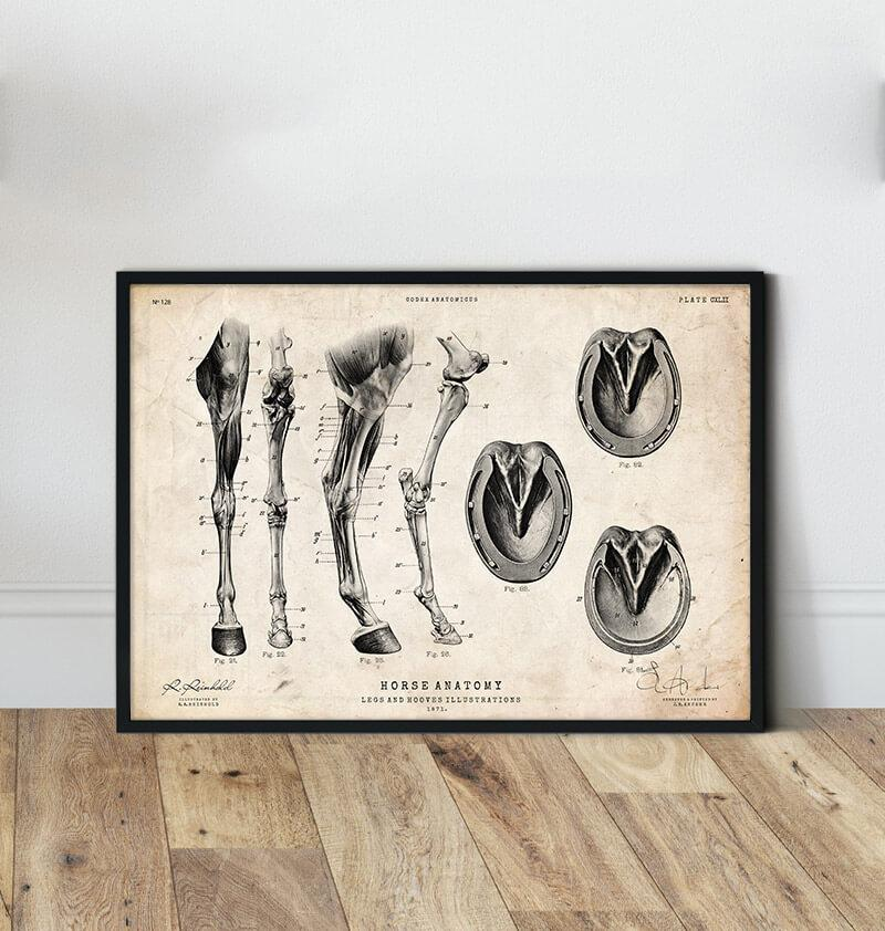 Horse legs and hooves anatomy poster