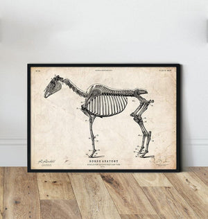 Horse anatomy art print by Codex Anatomicus