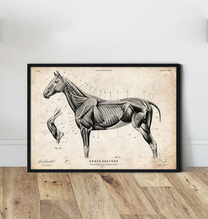 Horse anatomy poster by Codex Anatomicus
