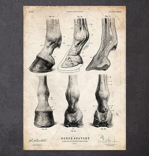 Horse hooves anatomy art