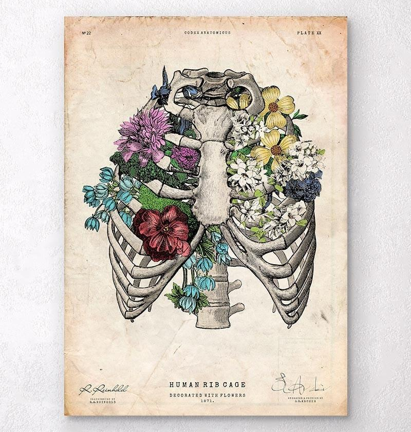 Anatomy Art, Gifts for Doctors & Quirky Home Decor - Codex Anatomicus