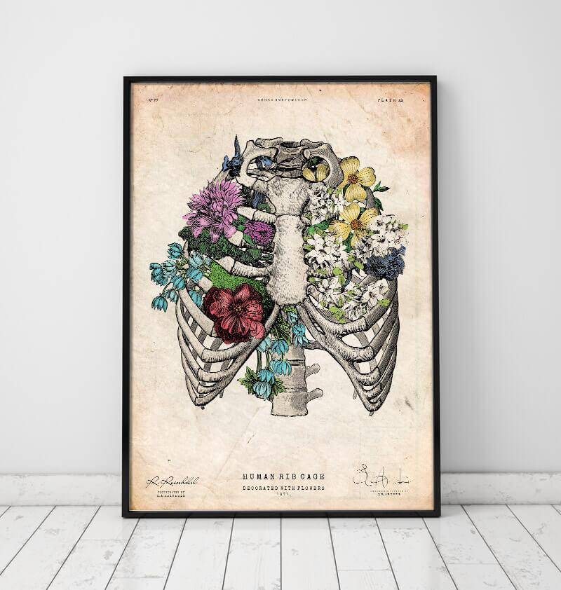 Rib cage art print - Anatomy Art by Codex Anatomicus