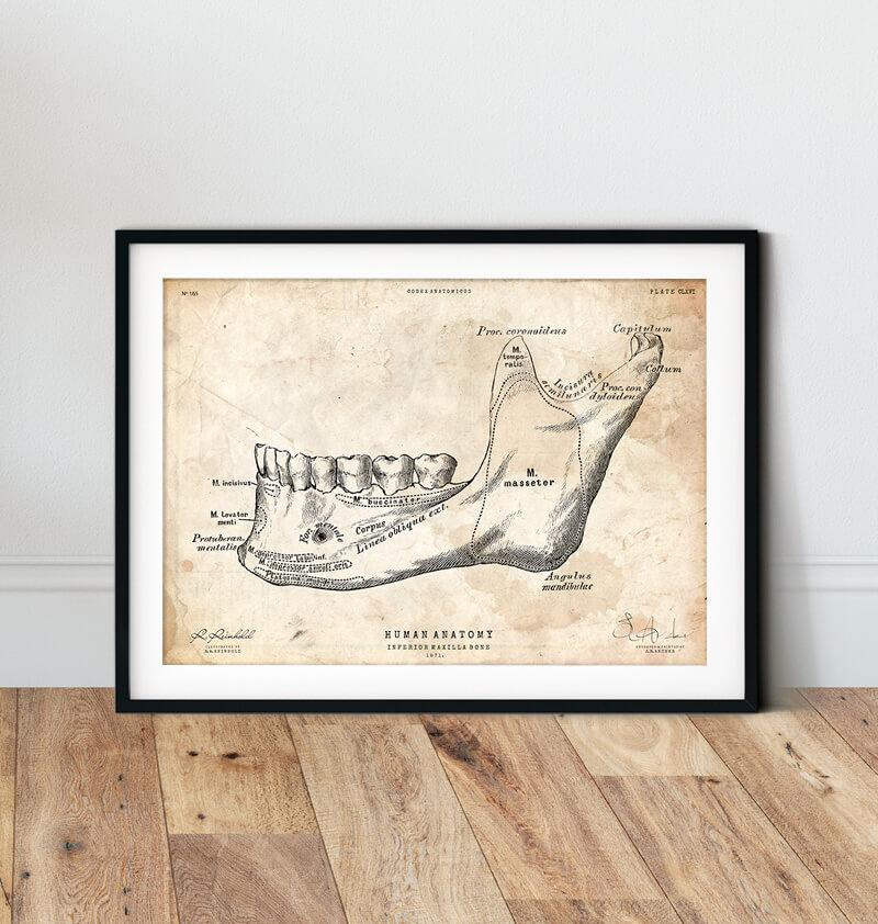 Teeth and jaw bone vintage anatomy poster in a frame by codex anatomicus