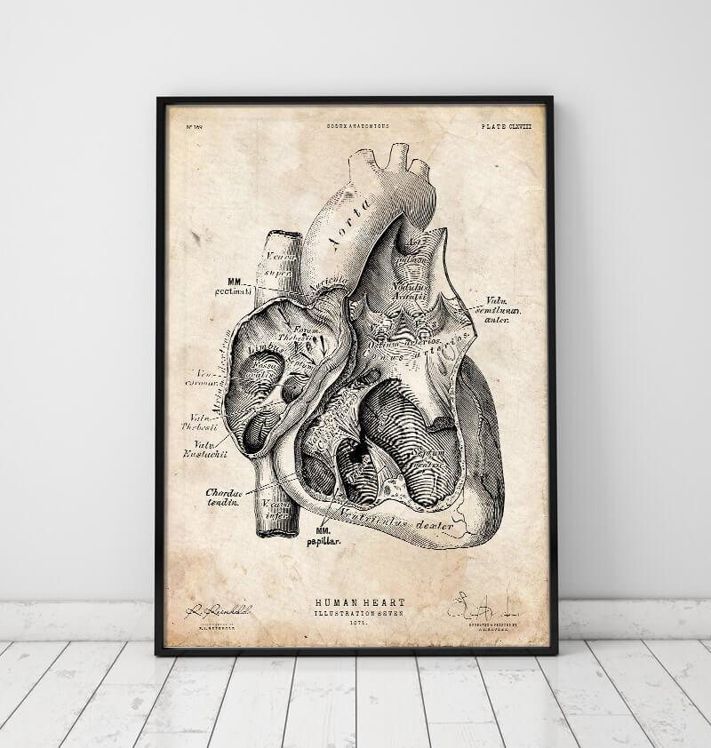 Heart section art print I