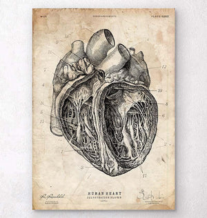 Heart section art print