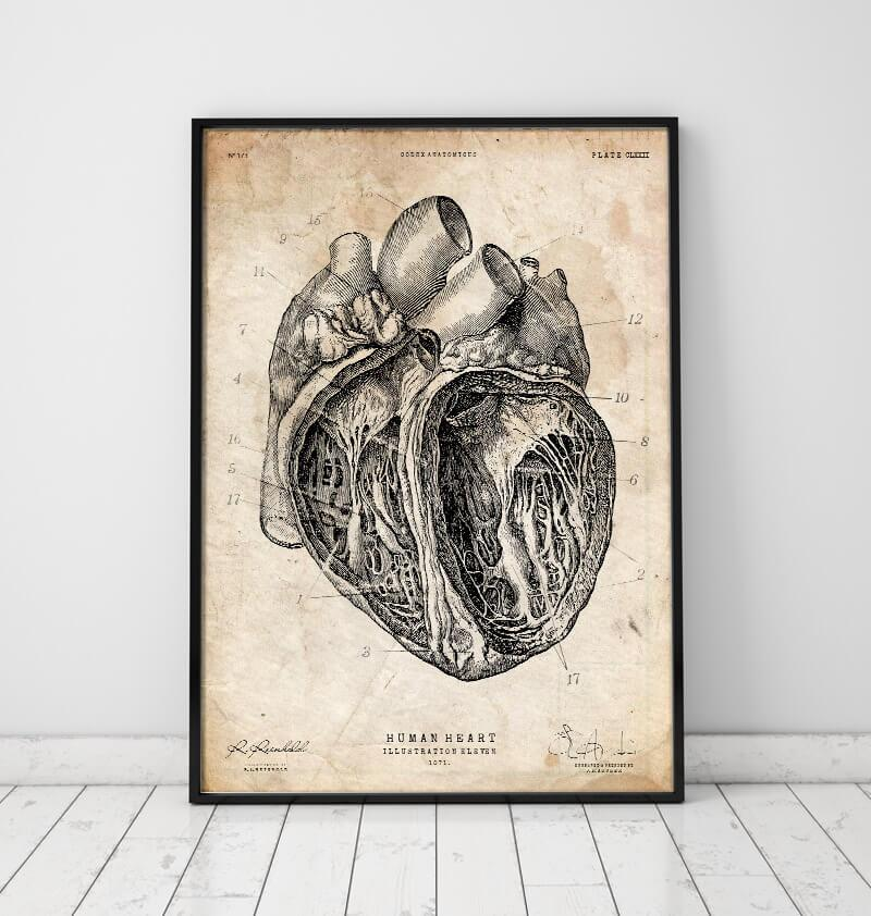 vintage anatomy poster of a heart by codex anatomicus