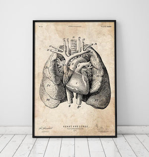 Heart and Lungs anatomy art I vintage poster