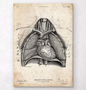 Heart and Lungs anatomy art print