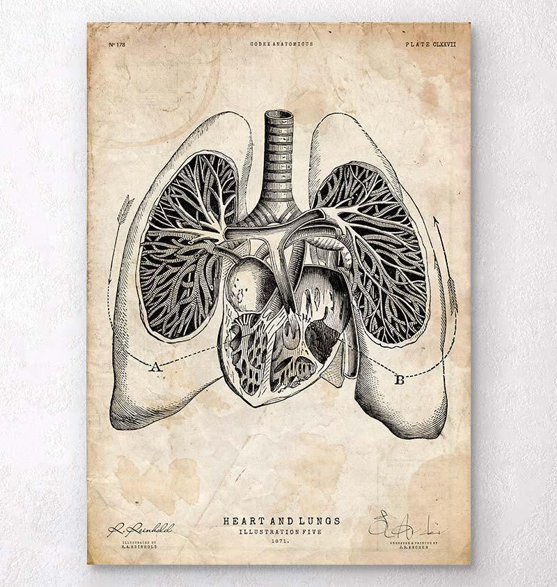 Heart and Lungs anatomy art poster