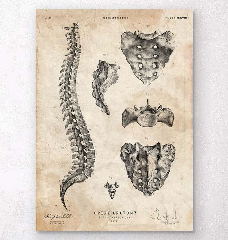 Spine anatomy art print