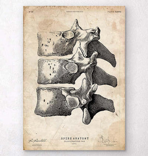 Anatomy of the spine art print