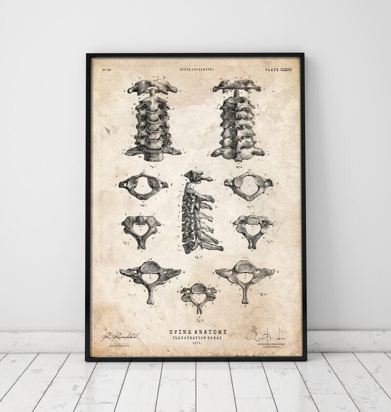 Spine vintage anatomy poster by Codex Anatomicus