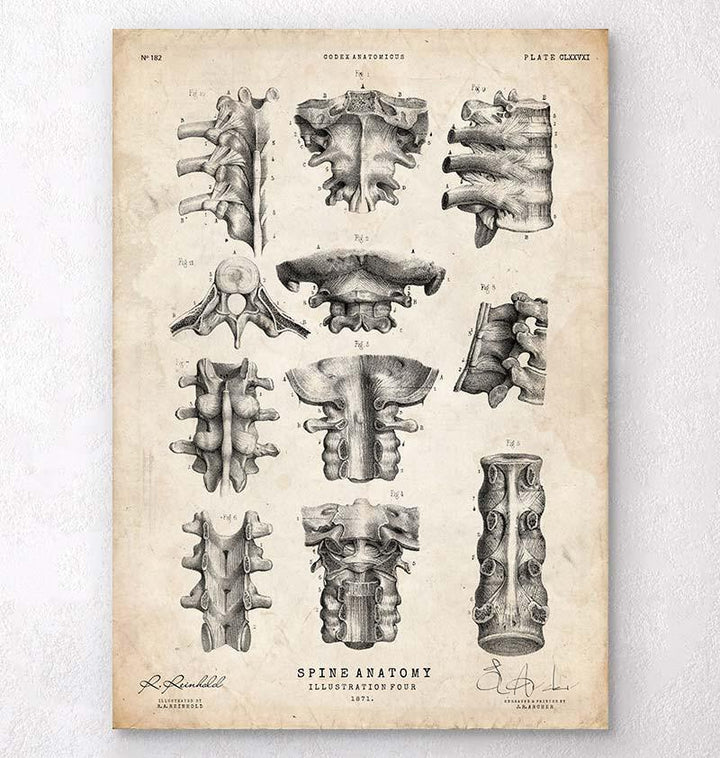 Spine anatomy poster