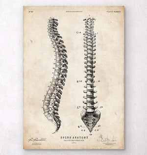 Spine anatomy chart