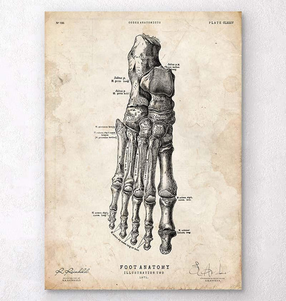 Leg And Hand Anatomy Anatomy Art Codex Anatomicus Tagged Old