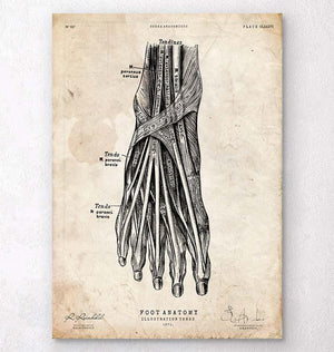 Foot anatomy poster