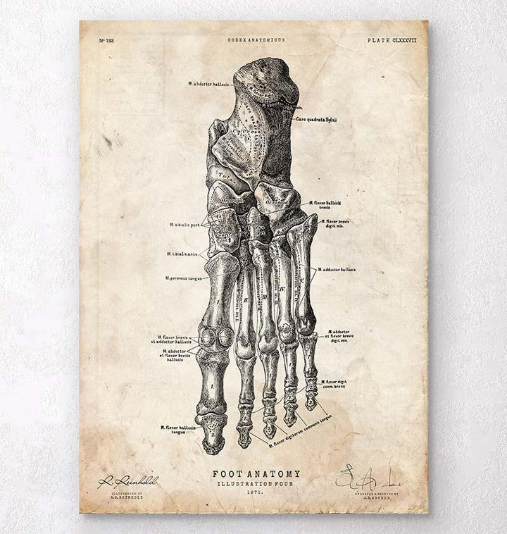 Foot anatomy print