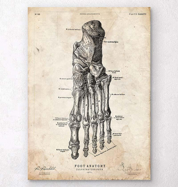 Leg and Hand Anatomy - Anatomy Art - Codex Anatomicus