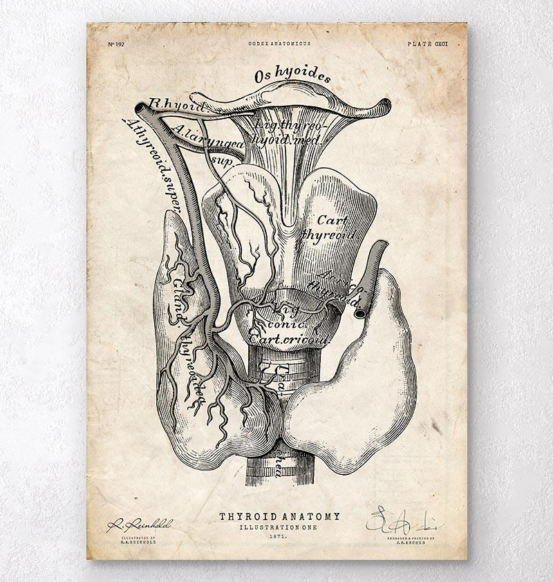 Thyroid anatomy art print - Codex Anatomicus