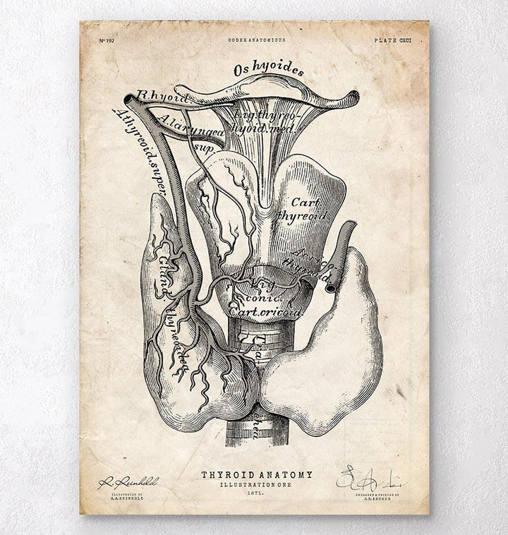 Thyroid anatomy art print