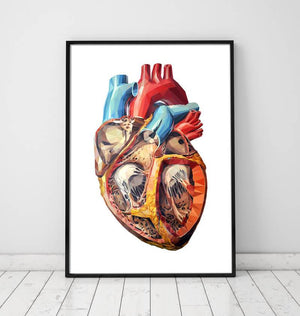 Anatomical heart anatomy poster