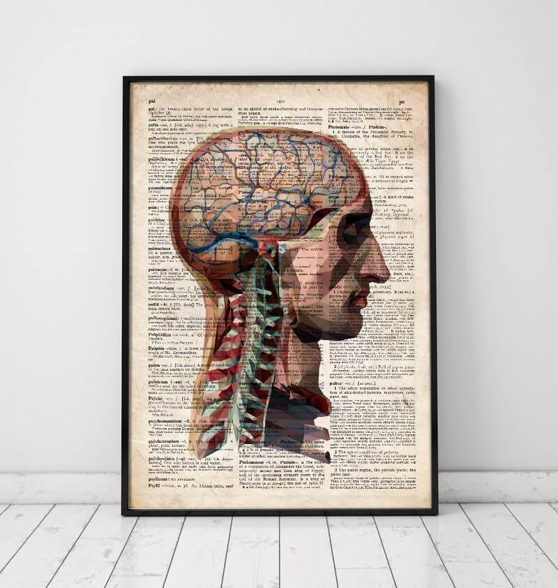 Head and brain anatomy poster on Old dictionary page