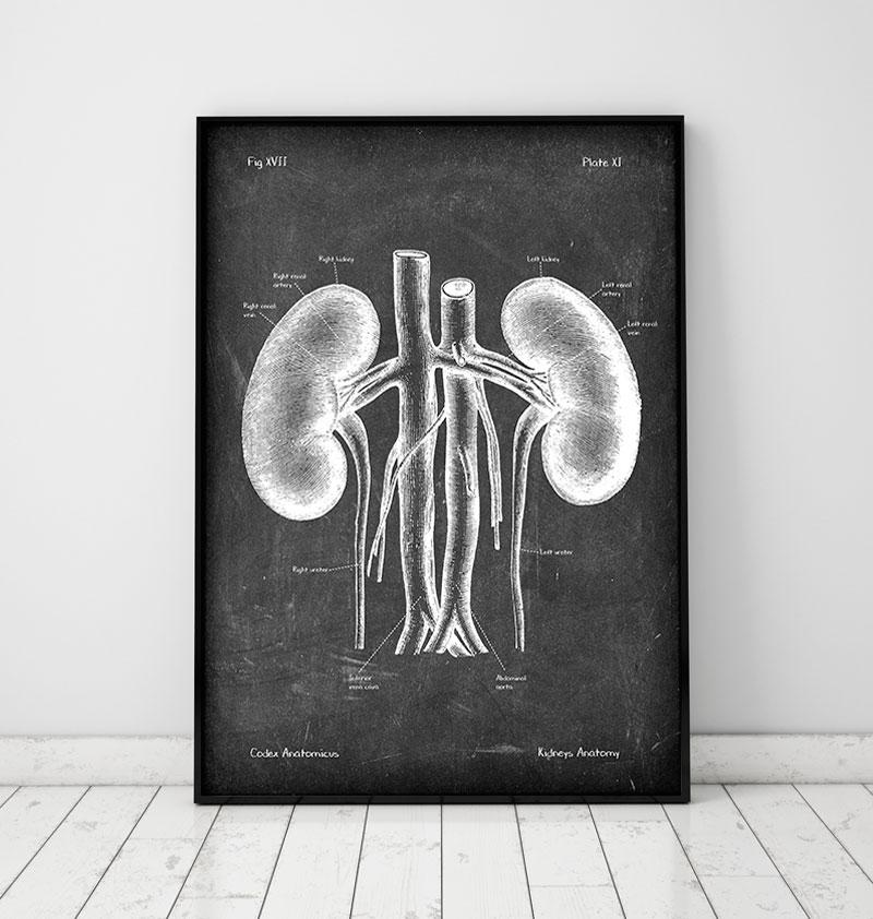 Kidneys anatomy art - Chalkboard