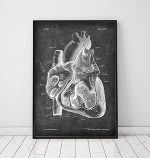 Dissected anatomical heart poster