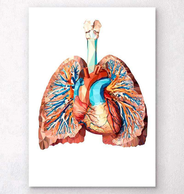 Heart and lungs art poster