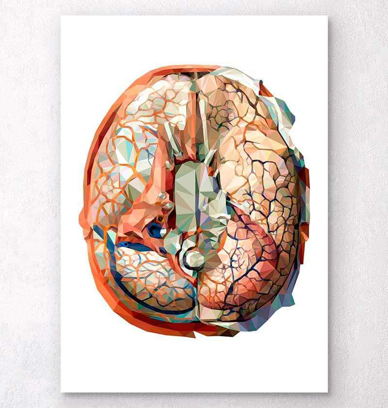 Geometrical brain anatomy art
