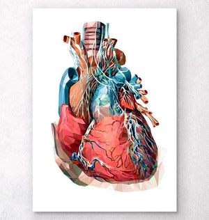Geometrical heart anatomy III
