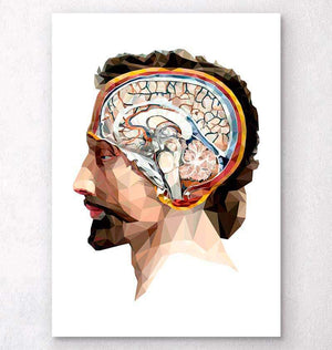 Head and brain anatomy