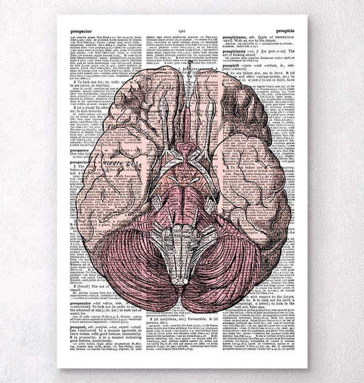Brain anatomy dictionary art print