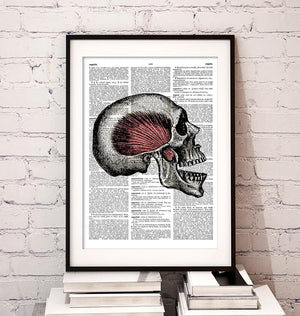 Skull anatomy dictionary art print