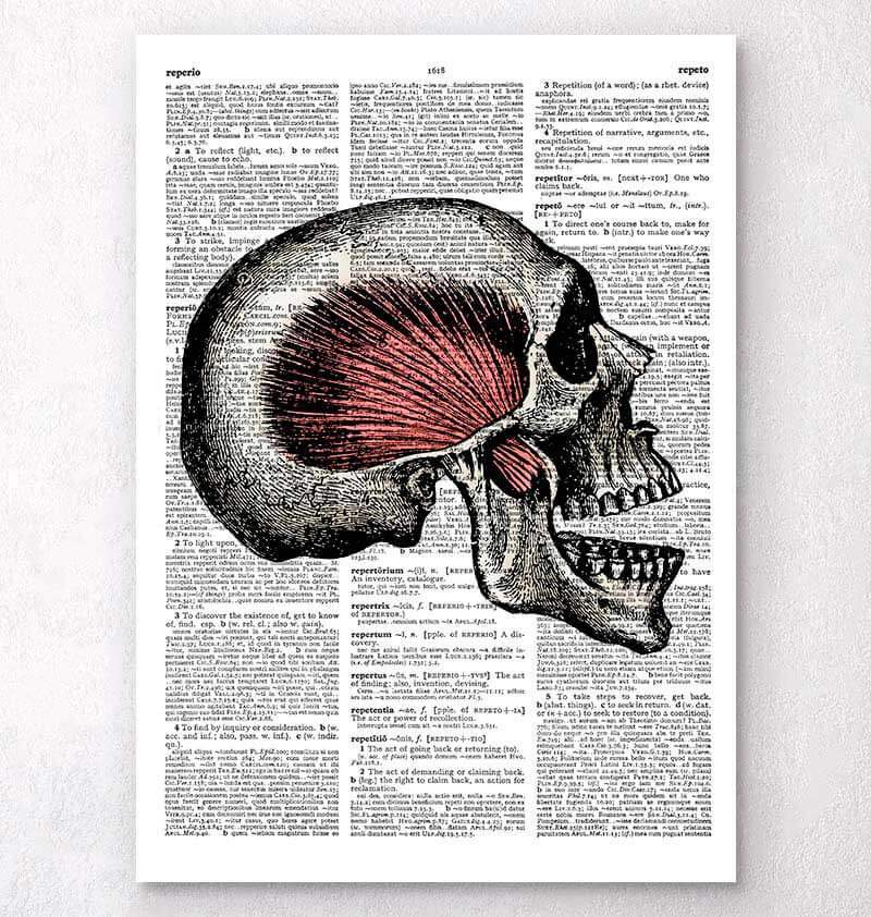 Skull anatomy dictionary art
