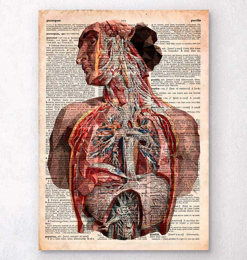 Human Anatomy Dictionary Art Print Codex Anatomicus