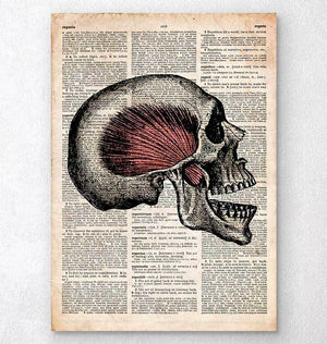 Skull dictionary art print