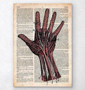 Hand anatomy dictionary art print