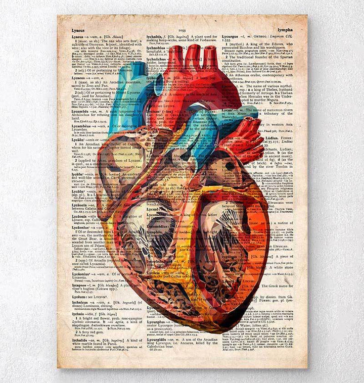 Geometric heart anatomy - Old dictionary page