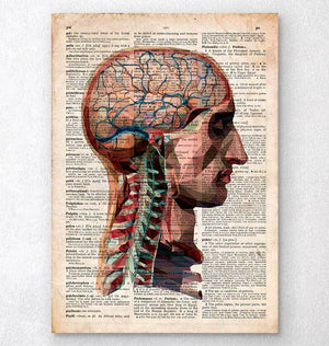 Head and brain anatomy - Old dictionary page