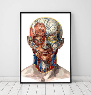 Geometrical face anatomy poster